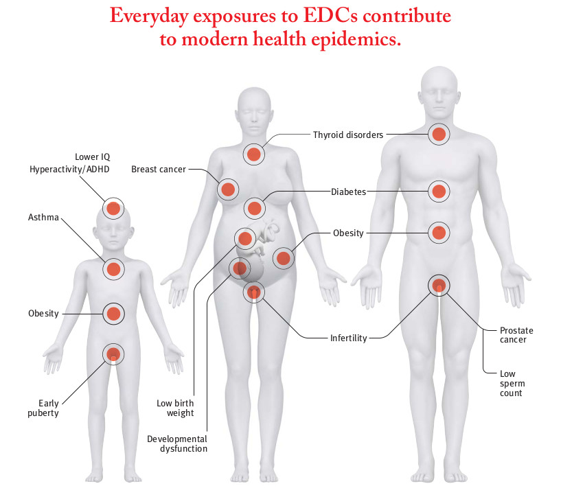 Infographic showing health epidemics linked to EDC exposure