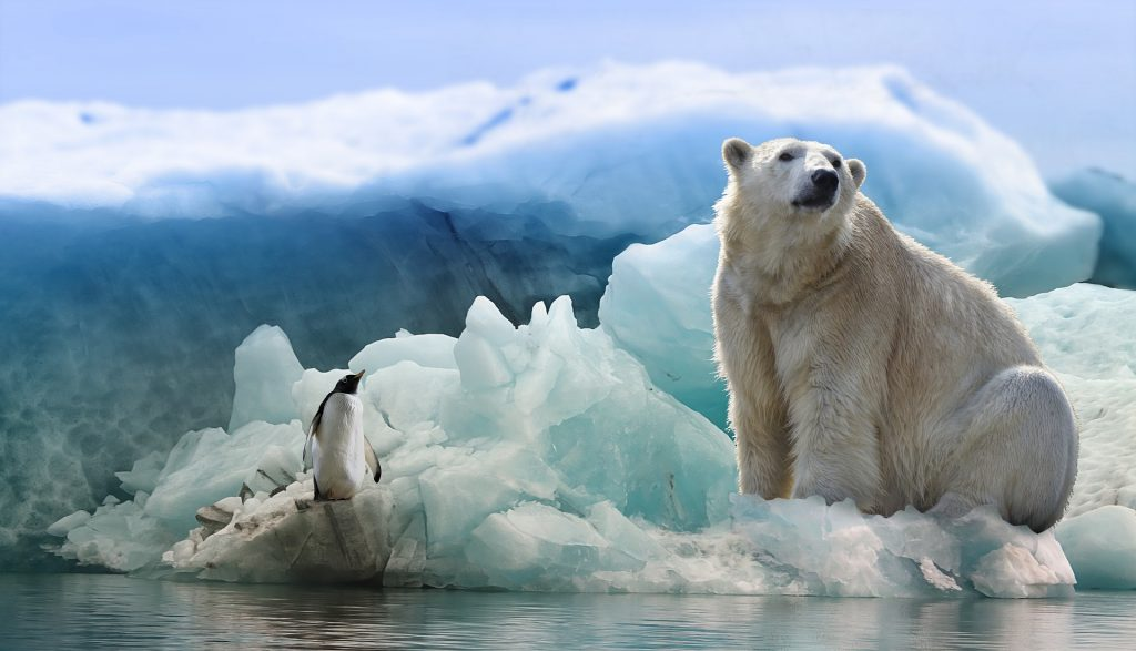 The polluting chemical in our sofas – and polar bears – that shows that REACH controls are failing